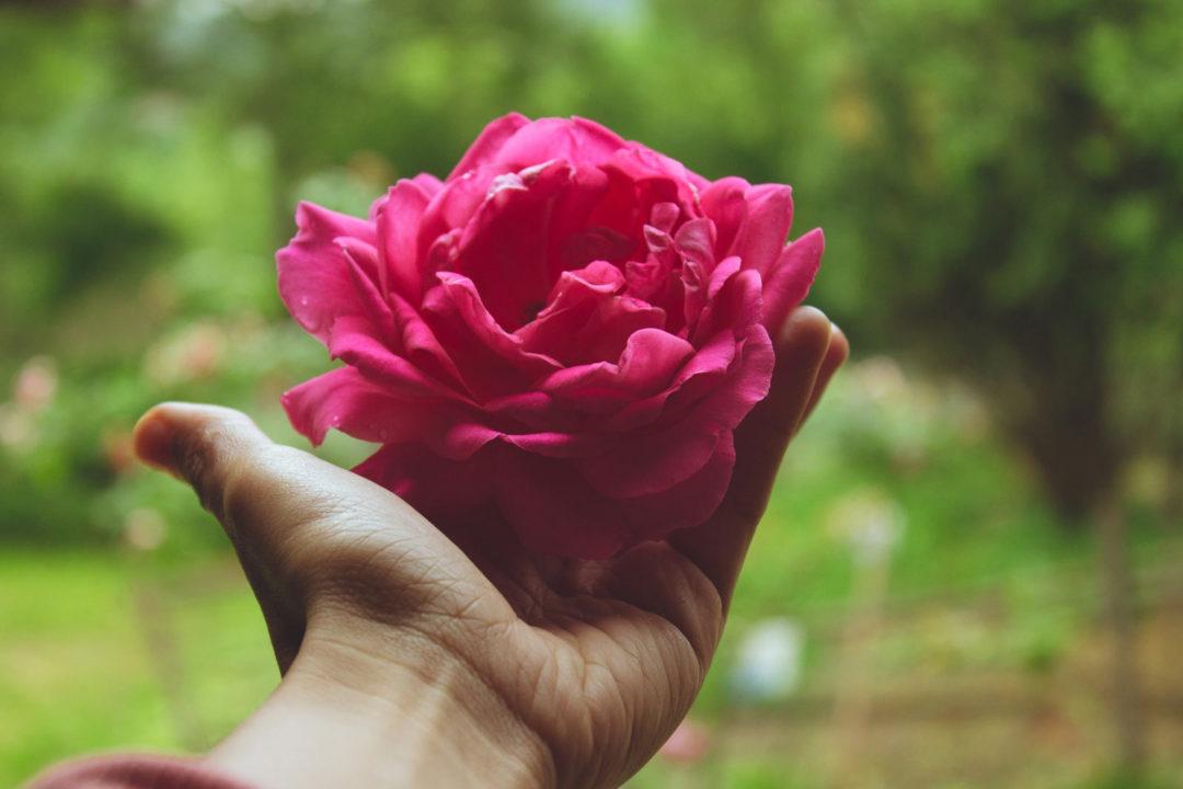 8 Novembre – Torino – Riscopri il tuo potere femminile attraverso il ciclo mestruale